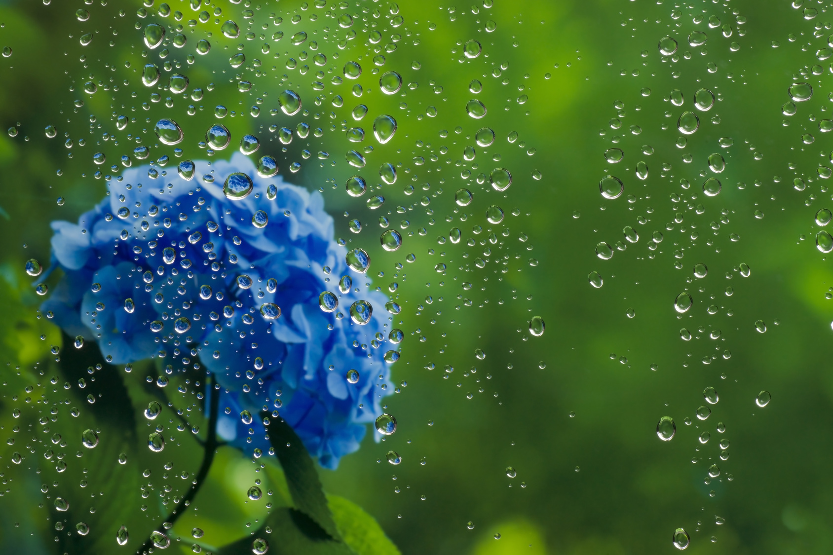 いつ 開ける 梅雨